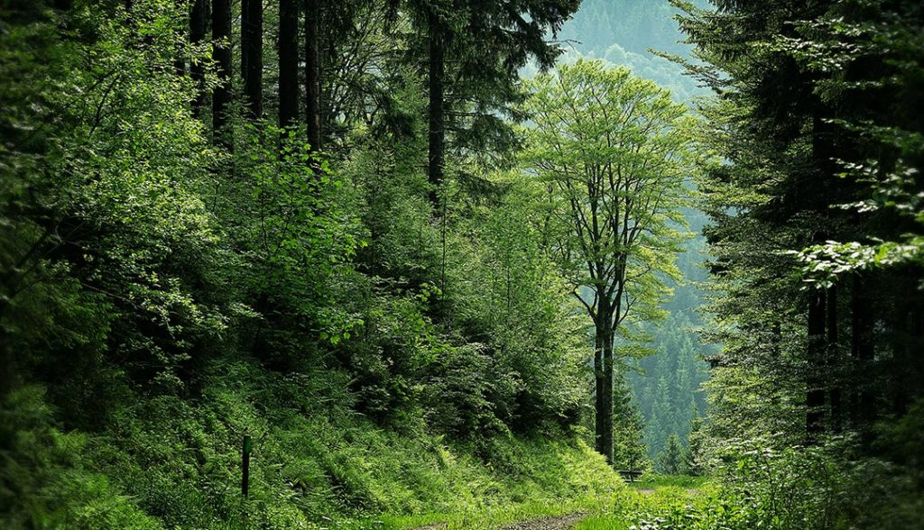 The Importance of Forests to the Carbon Cycle