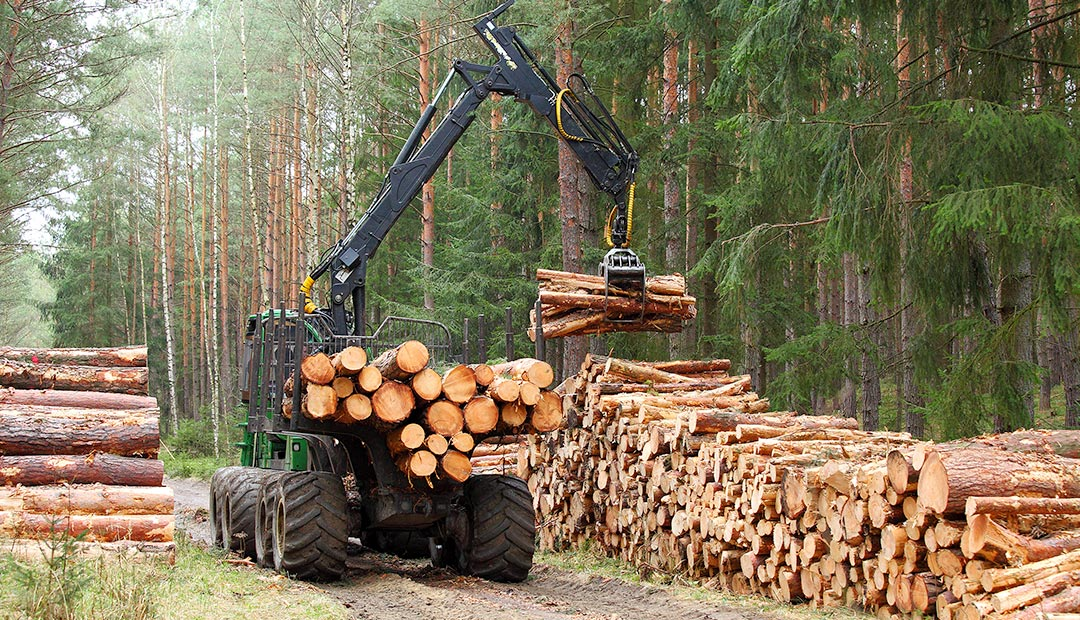 EU renewable energy policy subsidizes surge in logging of Estonia's protected areas