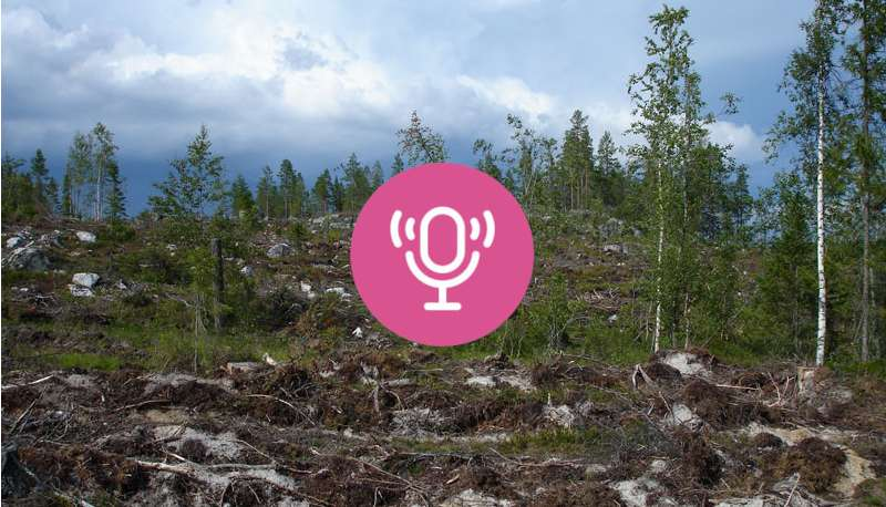 Lina Burnelius on Sweden's forestry model: sustainable or greenwash?